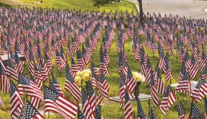 American flags across a green lawn
